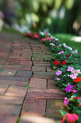 impatiens, shade, annual, flowers