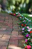 impatiens, flower, annual